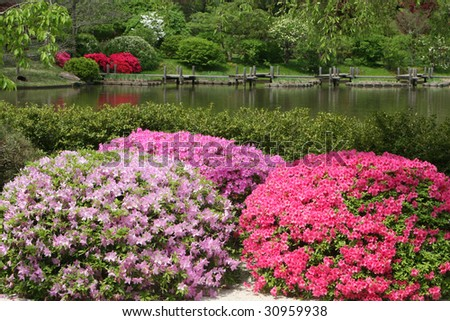 blooming azalea bushes at the shore of a park lake - stock photo