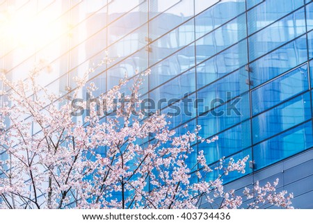 blooming cherry trees in front of the office building   - stock photo