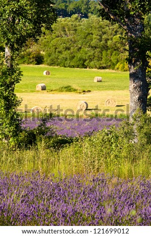 Blooming field of Lavender (Lavandula angustifolia) around Sault and Aurel, in the Chemin des Lavandes, Provence-Alpes-Cote d'Azur, Southern France, France, Europe, PublicGround