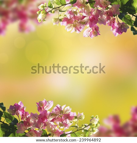 Blooming flowers and green summer (spring) bokeh background - stock photo