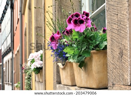 Blooming flowers in a window box. - stock photo