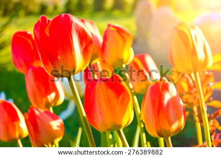 Blooming flowers in the green grass at spring. Nature and spring background. - stock photo
