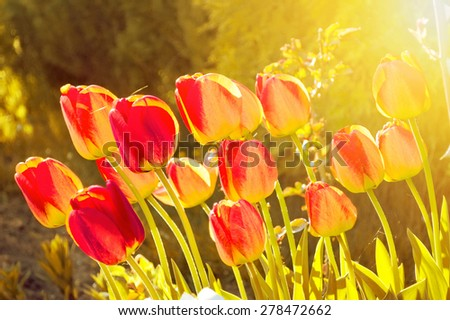 Blooming flowers in the green grass at spring. Nature and spring background.
