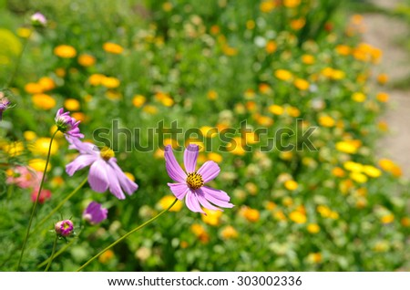 Blooming flowers in the home garden - stock photo