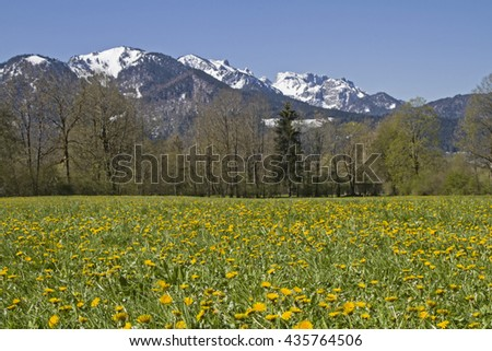 Blooming flowers meadow with Benediktenwand mountains in the spring