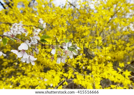Blooming flowers on yellow flowers background. Beautiful flowers - stock photo