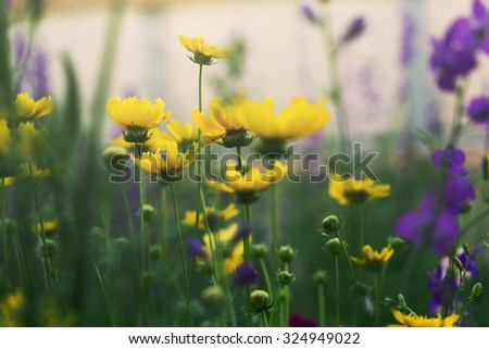 blooming flowers, outdoor shot - stock photo