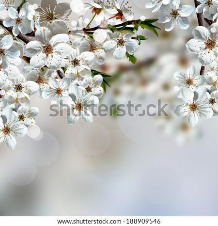 blooming garden - stock photo