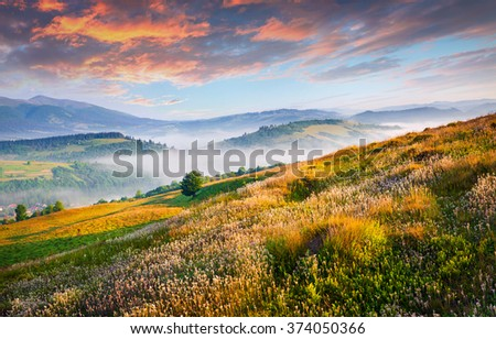 Blooming hills of Carpathian mountains in June. Colorful summer scene with rolling hills and valleys in golden morning light. - stock photo