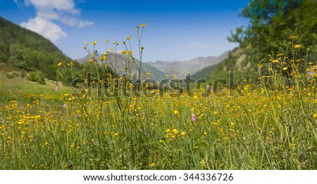 blooming in alpine meadows in summer sunny day - stock photo