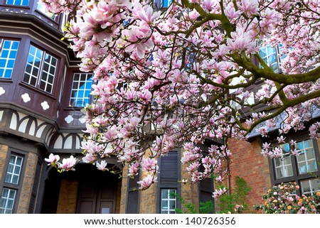 Blooming magnolia in the city. City landscape. - stock photo