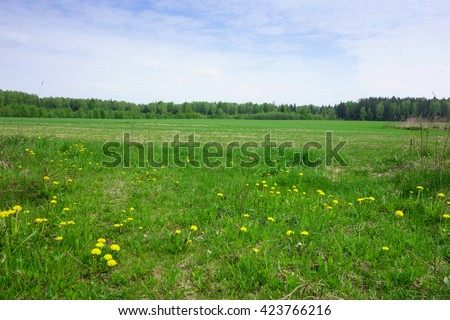 blooming meadow under blue sky outdoors