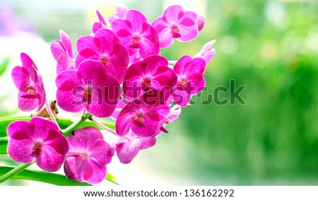 Blooming Orchids in the Garden