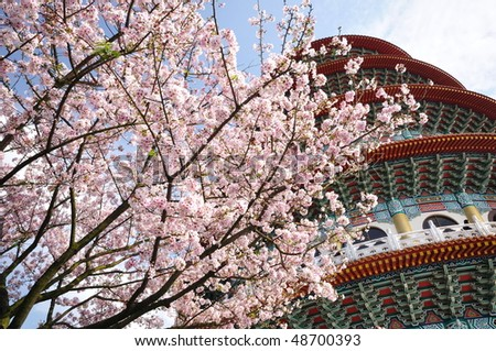 blooming pink flowers and a color pagoda