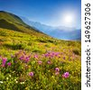Blooming pink flowers in the Caucasian mountains - stock photo