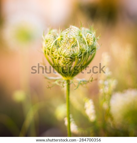 Blooming plant - stock photo