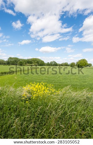 Blooming rape, grasses and other wild plants on the edge of a large flat pasture with a backdrop of trees and shrubs. It is spring and the sky is blue with white clouds. - stock photo