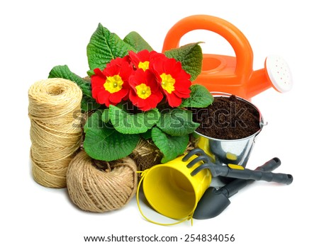 Blooming red spring primulas in flower bed with rake, shovel, watering can, thread isolated on white - stock photo