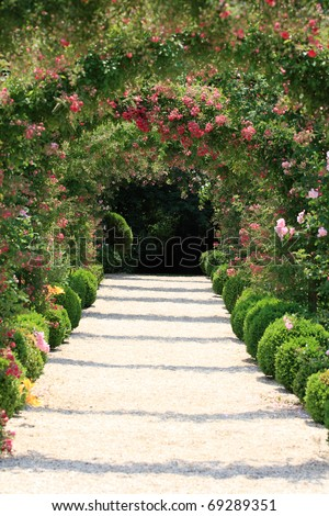 Blooming Rose Arch In the Garden at Spring time - stock photo
