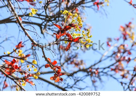 Blooming spring - stock photo