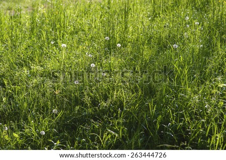 Blooming spring meadow herb and grass - stock photo