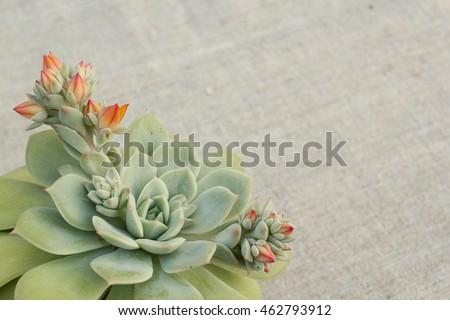 Blooming Succulent Bottom Left Corner Frame Stock Photo (Royalty ...