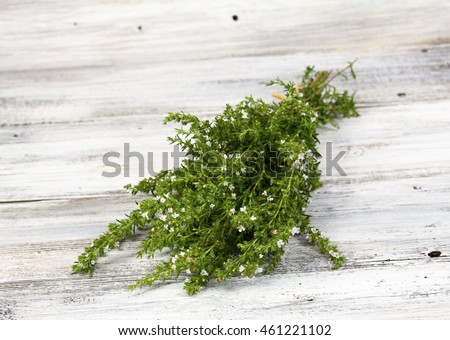 Blooming summer savory, lat. Satureja hortensis,  homeopathic remedy and traditional popular herb