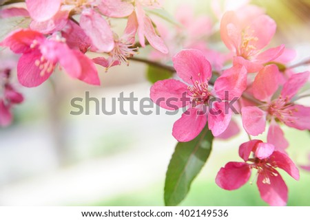Blooming tree background - stock photo