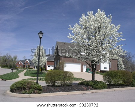 blooming tree in front of a corner-lot house - stock photo