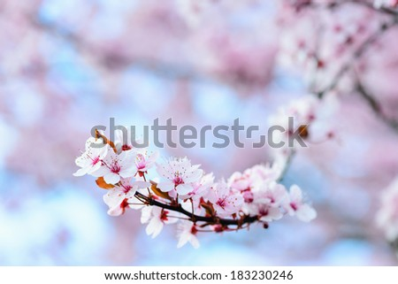 Blooming Tree In Spring With Shallow Depth Of Field - stock photo