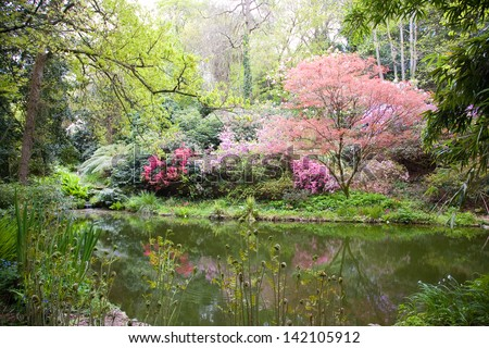 Blooming trees in the nature during spring - stock photo