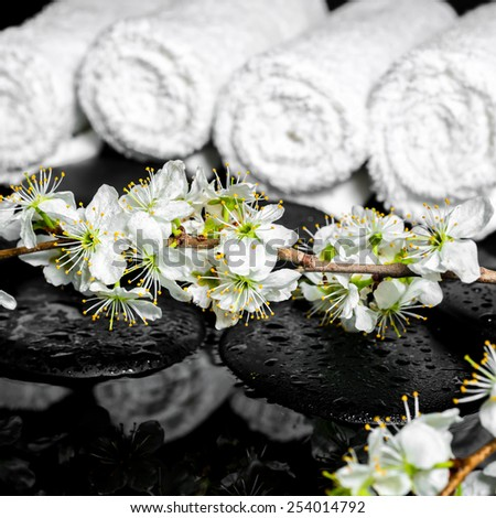 blooming twig of plum, white towels on zen stones with reflection water, spa background, closeup - stock photo
