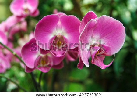 Blooming violet orchids