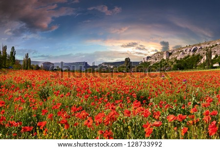Blossom field of poppies. Spring sunrise