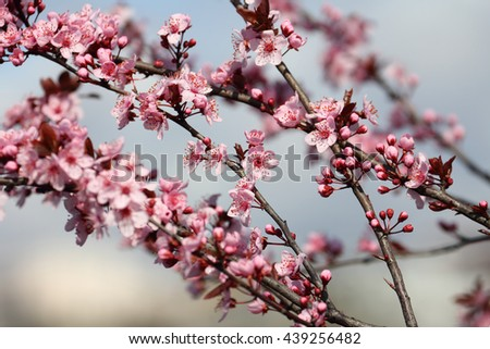 blossom fruit. beautiful spring, close up, local focus - stock photo