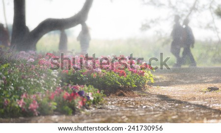 Blossom in the garden with water spray - stock photo