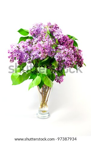 Blossom of spring flowers lilac in glass on white background