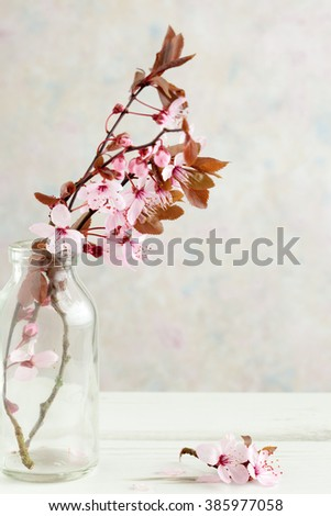 Blossom On Tree Branch Glass Vase Stock Photo Royalty Free