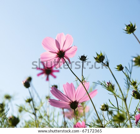 blossom purple flowers - stock photo