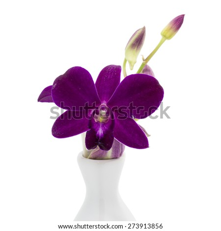 Blossom purple orchid in vase is isolate on whte background - stock photo
