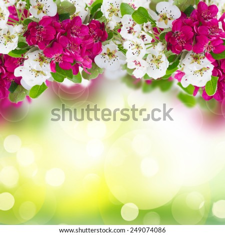 Blossoming apple and cherry  tree flowers with green leaves on green bokeh background - stock photo