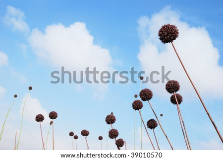 Blossoming balls of a deserted plants - stock photo