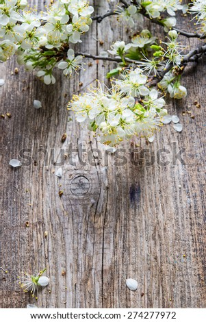 Blossoming branch on a wooden background - stock photo