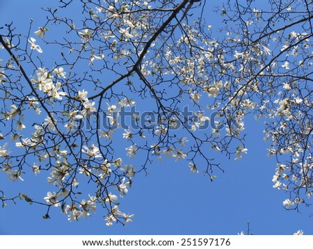 Blossoming branch with white flowers - stock photo