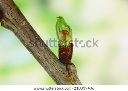 Blossoming buds on tree on bright background - stock photo