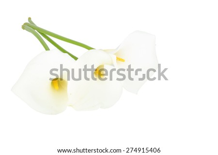 Blossoming calla flowers on a white background - stock photo