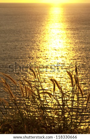 Blossoming grasses and wildflowers silhouetted  by sunset in front of ocean - stock photo