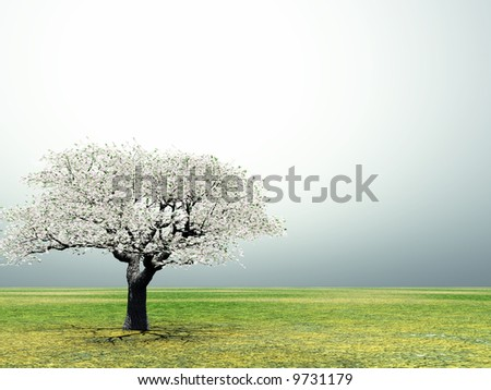 Blossoming lonely cherry-tree in the early morning light - stock photo