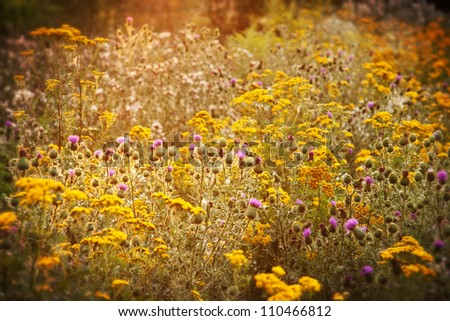 Blossoming meadow in the evening sun - stock photo