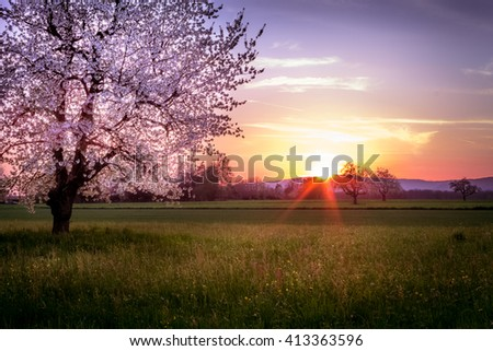 Blossoming Pink Cherry Tree During Sunset With Colorful Sky And Meadow With Illuminated Spots - stock photo